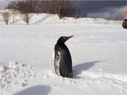 f:id:mbb-penguin:20160206212106j:image