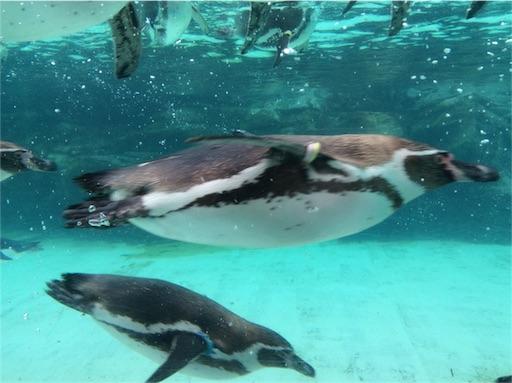 f:id:mbb-penguin:20160312095736j:plain