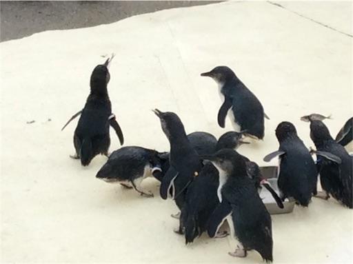 f:id:mbb-penguin:20160501174837j:plain