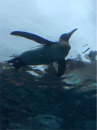 f:id:mbb-penguin:20160911201517j:plain