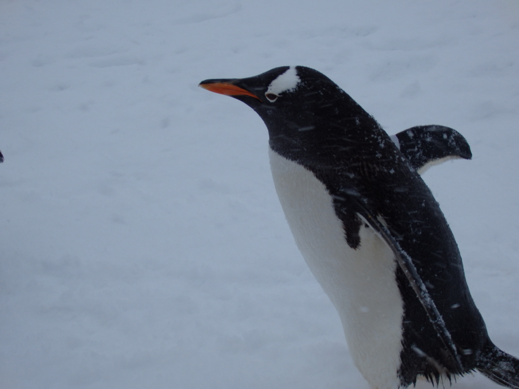f:id:mbb-penguin:20170124221426j:plain