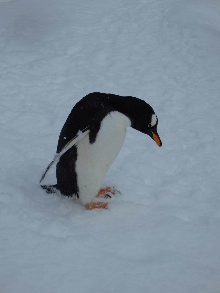 f:id:mbb-penguin:20170124221526j:plain
