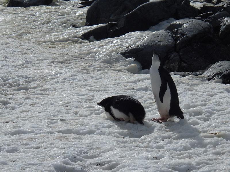 f:id:mbb-penguin:20170421212143j:plain
