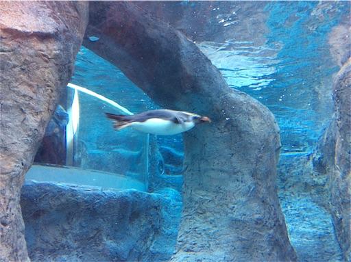 f:id:mbb-penguin:20180204200747j:image