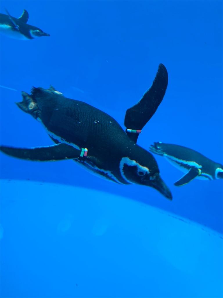 f:id:mbb-penguin:20200402215000j:plain