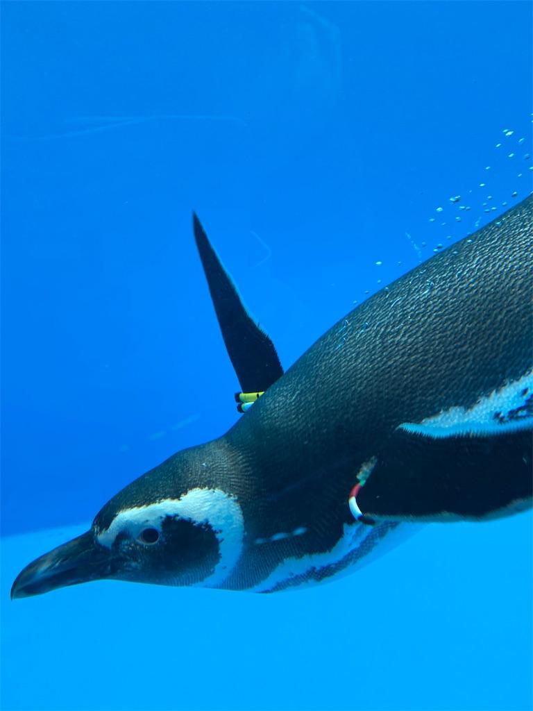 f:id:mbb-penguin:20200530211537j:image