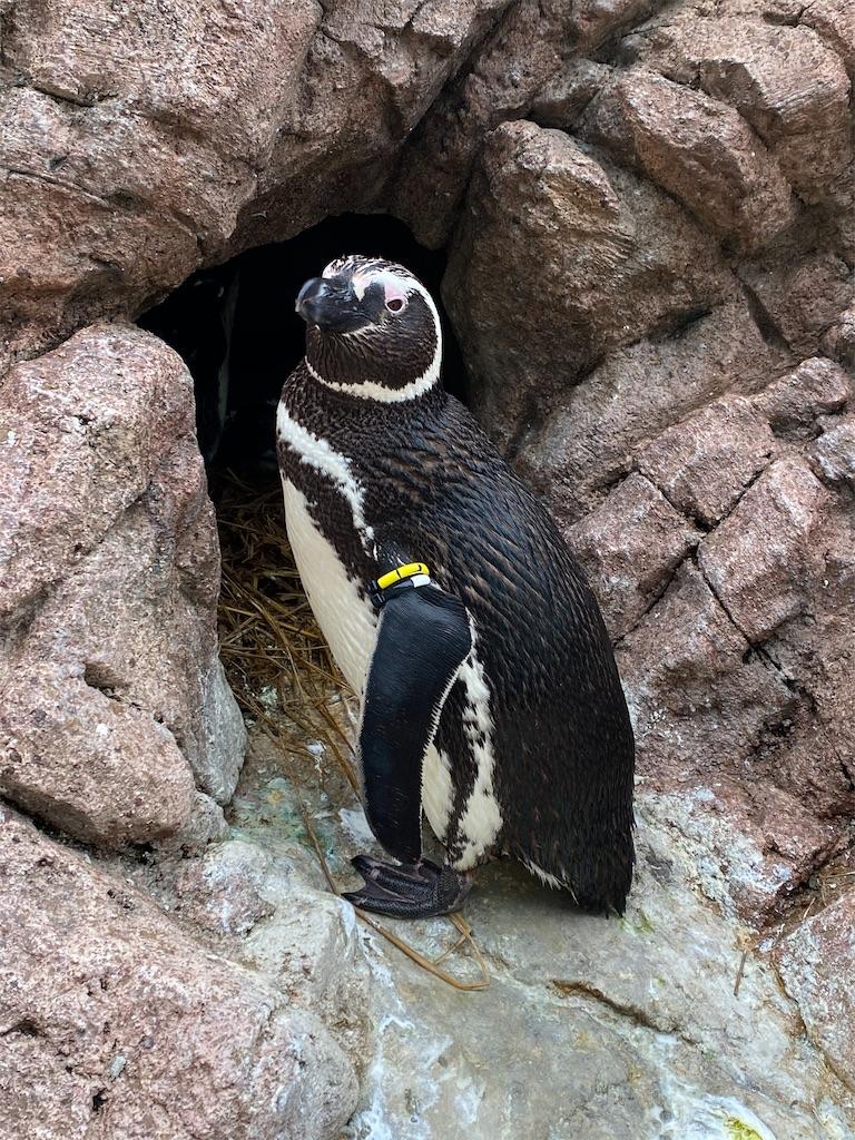 f:id:mbb-penguin:20200530212001j:image