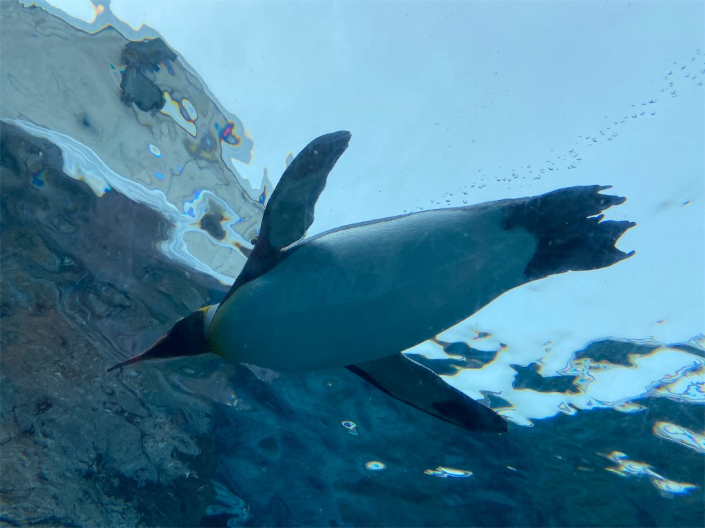f:id:mbb-penguin:20200530212115j:image