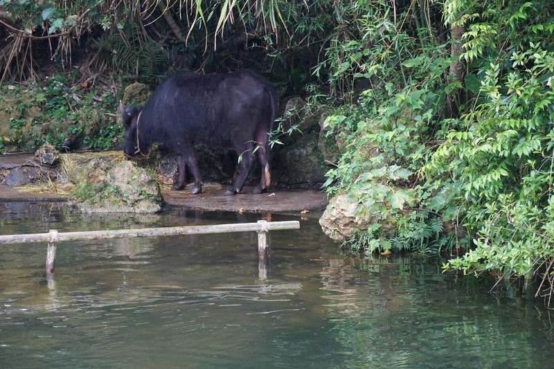 ビオスの丘_船-水牛
