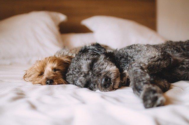 気持ちよくベッドでぐっすり眠る