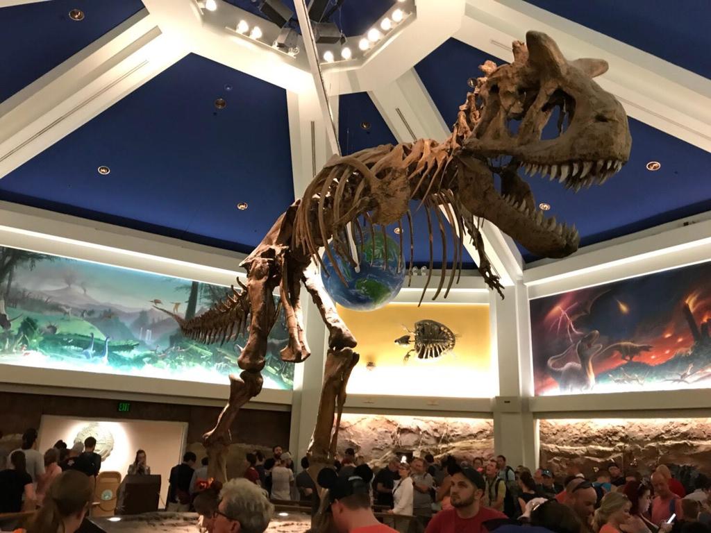 ダイナソーの中にある恐竜の化石
