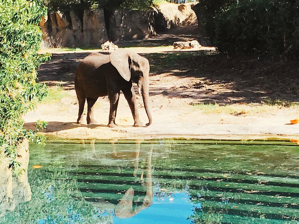 キリマンジャロ・サファリにいるゾウ