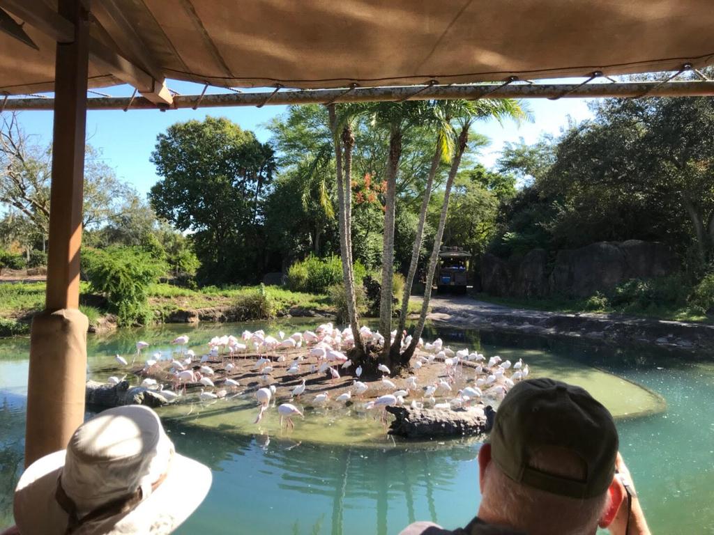 キリマンジャロ・サファリにいるフラミンゴ