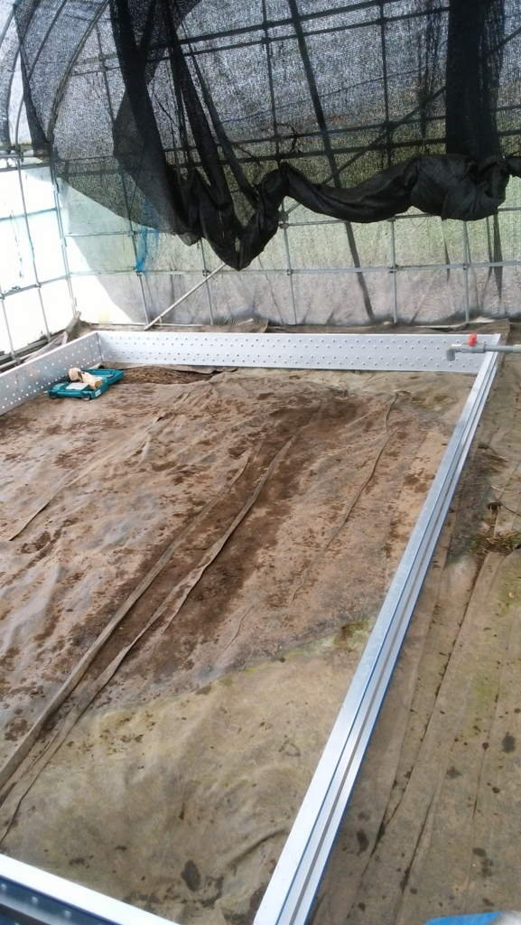 メダカ飼育池を作る