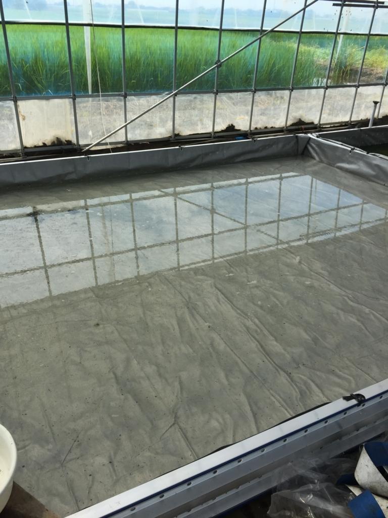 メダカの飼育池