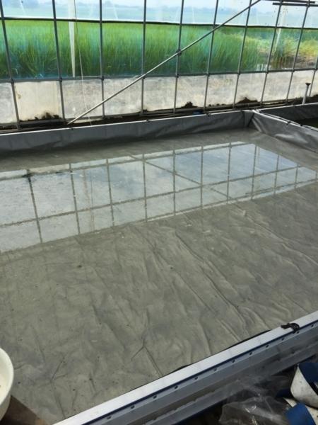 メダカ飼育池