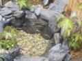 [メダカ][ビオトープ][和風][日本庭園]メダカ盆栽~もみじ~ メダカ増員
