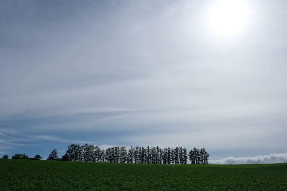 f:id:meganeya-moai:20190204185803j:plain