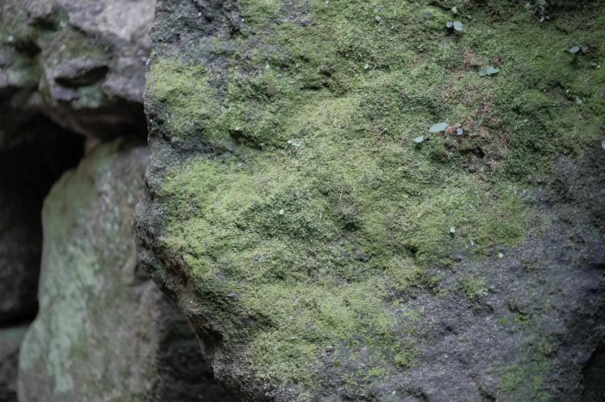 f:id:meganeya-moai:20190626140326j:plain