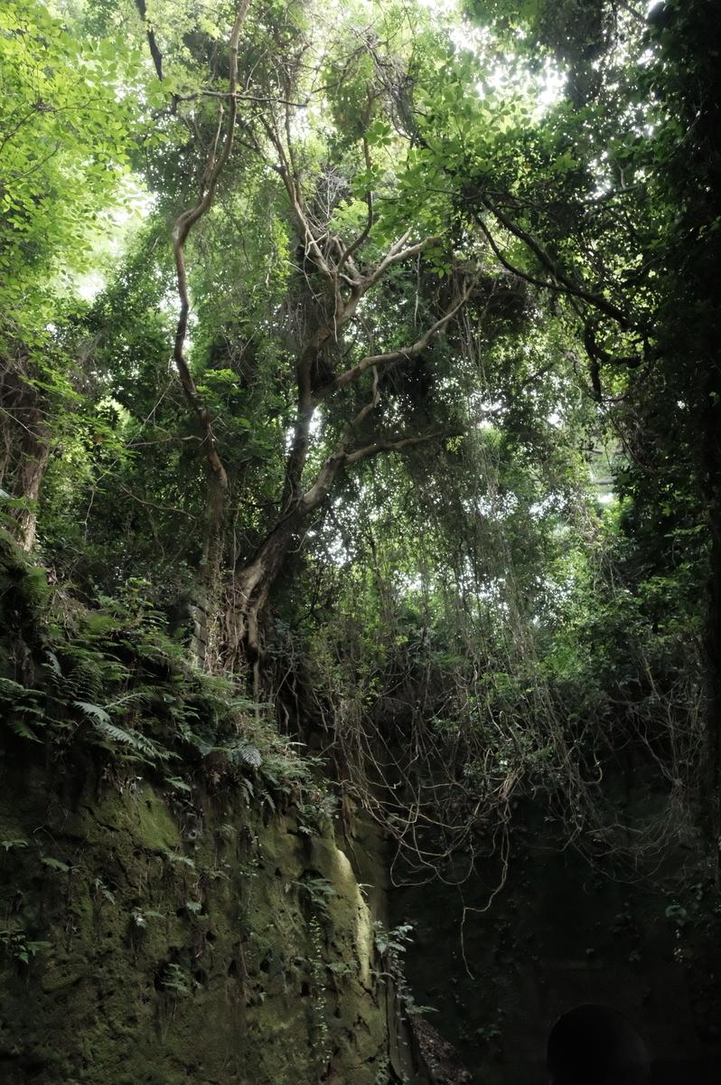 f:id:meganeya-moai:20190626141111j:plain