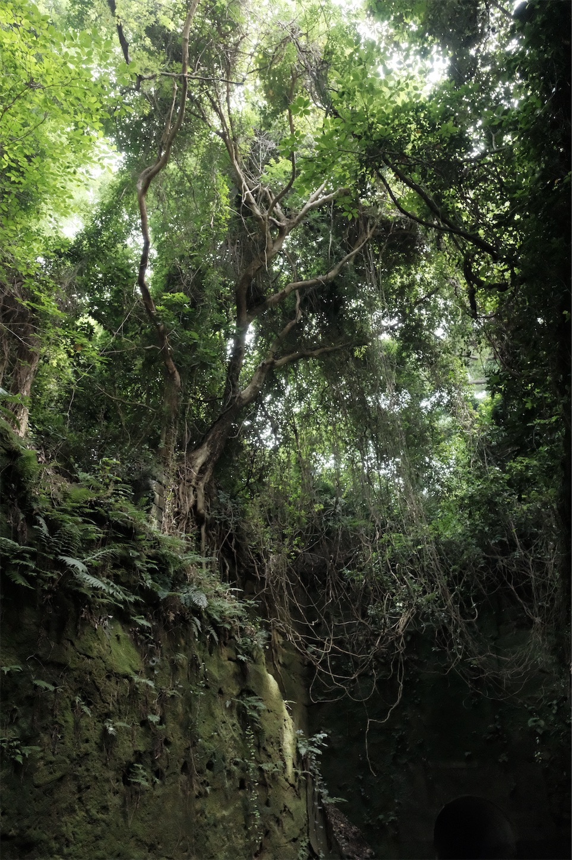 f:id:meganeya-moai:20191113075609j:image