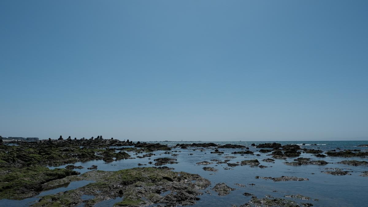 f:id:meganeya-moai:20210419125433j:plain