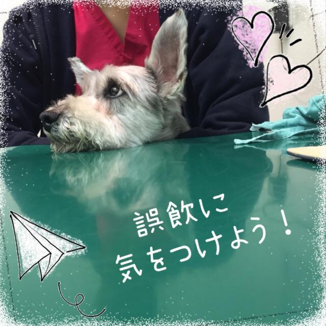 f:id:megumi-ah:20160627133726j:plain