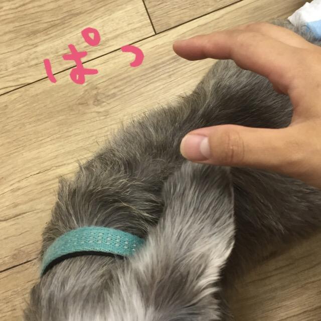 f:id:megumi-ah:20160709133116j:plain