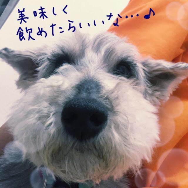 f:id:megumi-ah:20160716141908j:plain