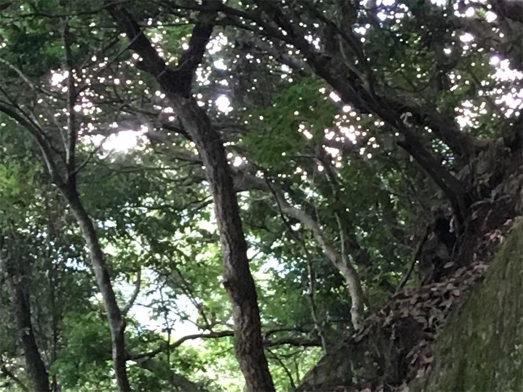 f:id:megumilachaise:20170820012246j:image