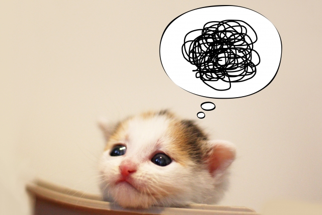 もやもやする猫