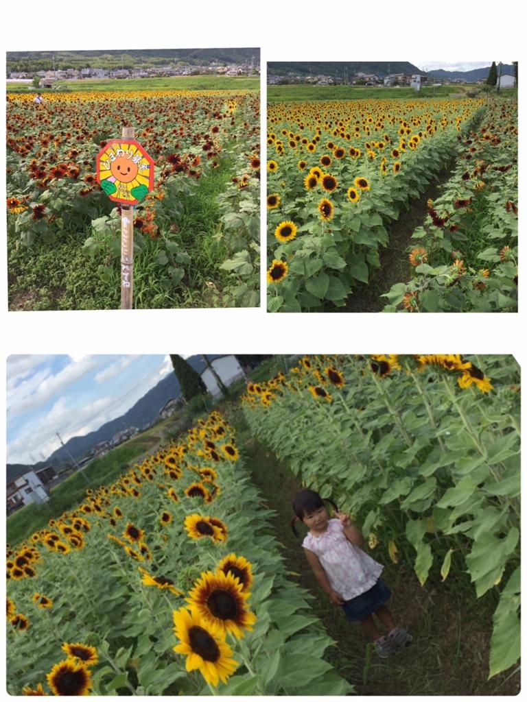 f:id:meisei-m:20160916110858j:plain