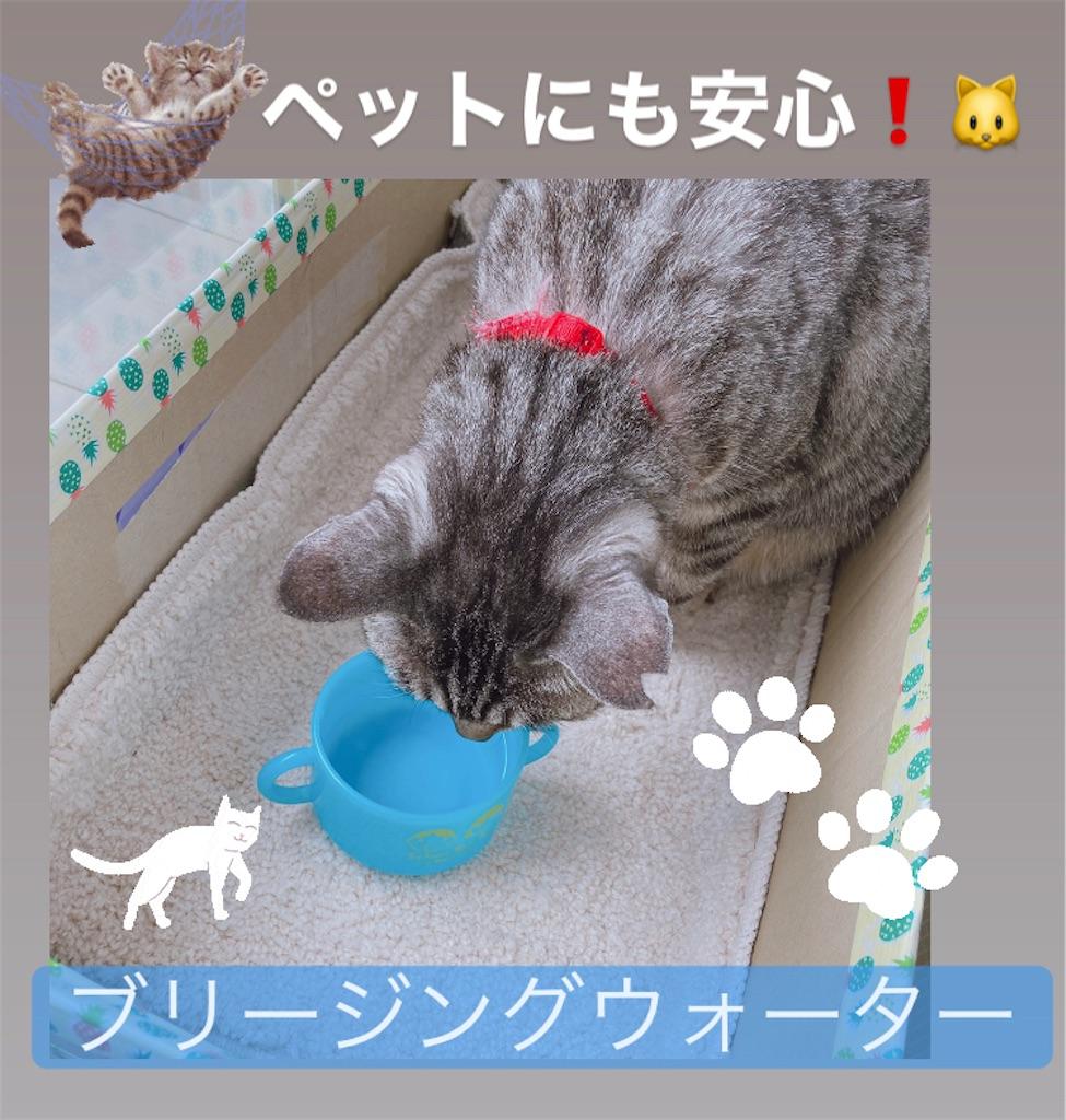 f:id:meitaro2020:20210326143046j:image