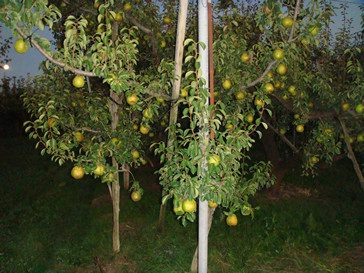 f:id:meizhizi87:20091009184952j:image