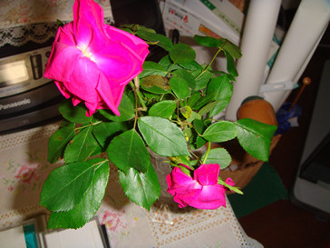 f:id:meizhizi87:20100603203002j:image