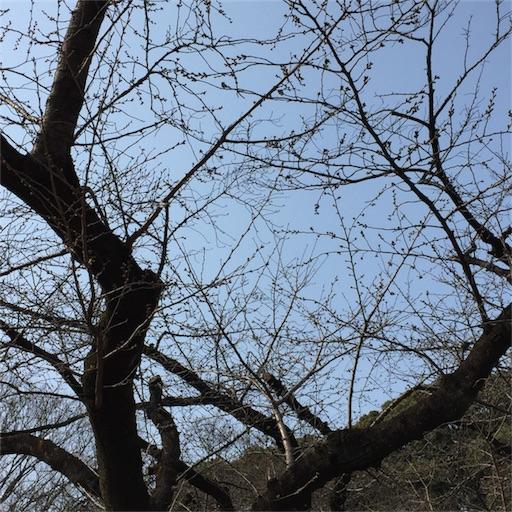 f:id:mekotasu:20170319190001j:image