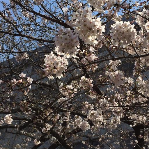 f:id:mekotasu:20170404111823j:image