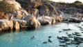 葛西ペンギン大量