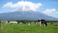 富士山牛さん