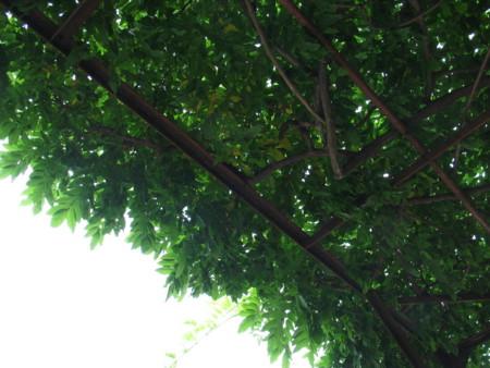 f:id:melonmelon:20090712151452j:image
