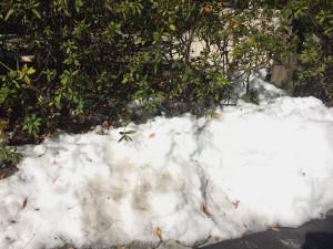 道端の残雪