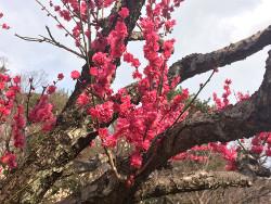 紅千鳥の枝
