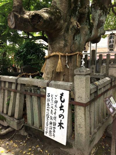 もちの木の画像