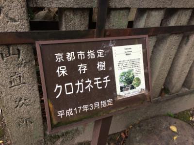 京都市指定保温樹のプレート