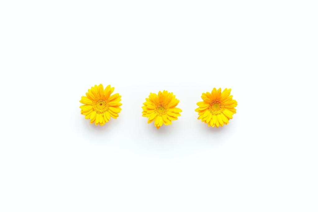 黄色 花 三つ 画像 写真