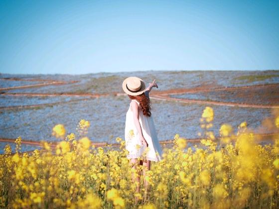 写真 画像 菜の花 青空 女の子