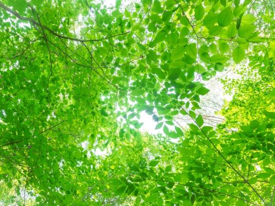 新緑 木々 癒し 画像