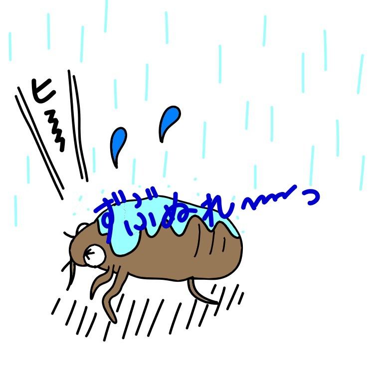ずぶ濡れのセミの幼虫