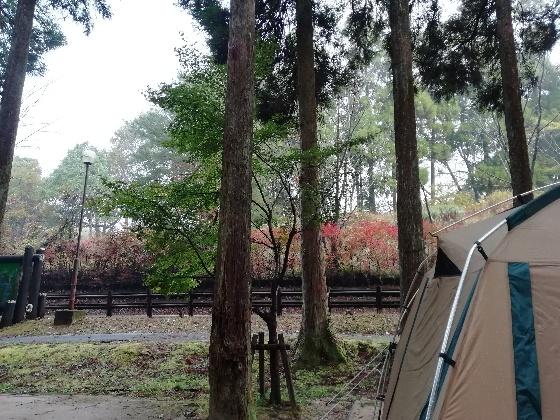 雨の早朝、北山キャンプ場