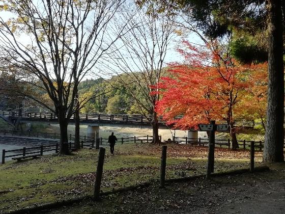 秋の北山キャンプ場1